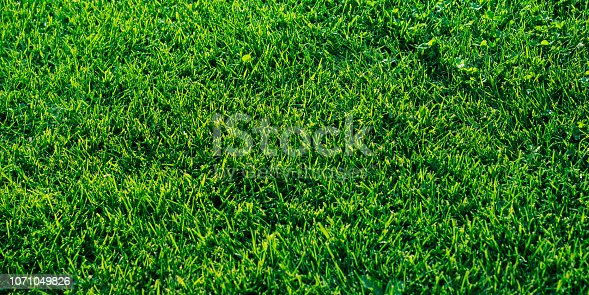istock Green grass textured background. Daylight 1071049826
