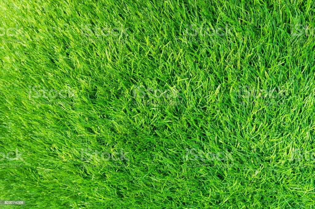 Green grass textured background stock photo