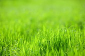 Vibrant spring grass background.
