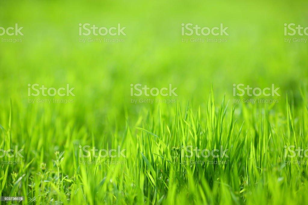 Green grass textured background stock photo