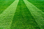 Green meadow grass field for football or soccer.