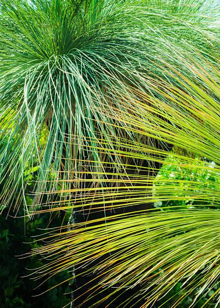 Green Grass Tree Plant stock photo