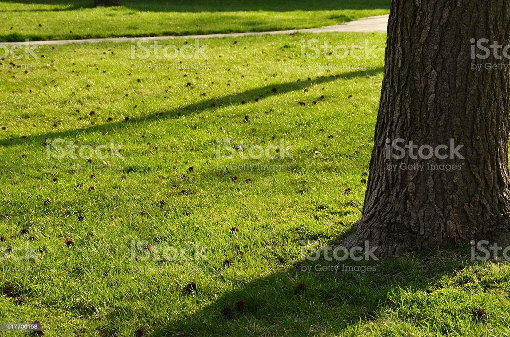 Green Grass Trees and Shadows stock photo