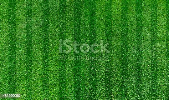 istock green grass turf 481590090