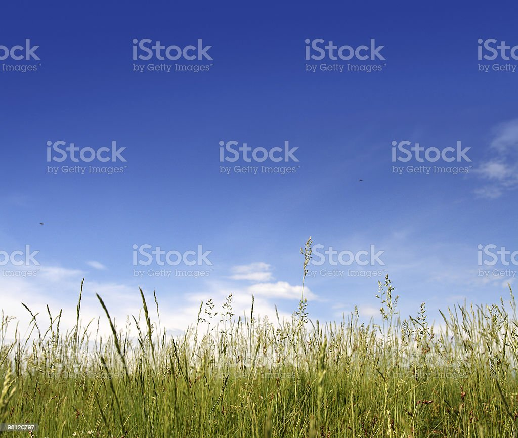 green grass under blue sky royalty-free stock photo
