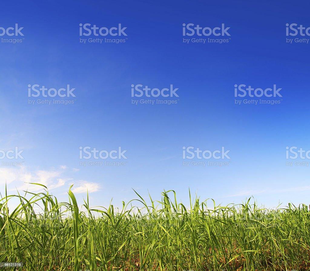 green grass under blue sky royalty-free stock photo