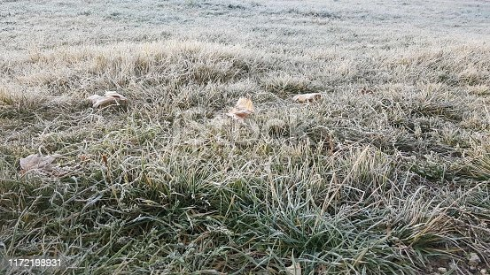 639394370 istock photo Green grass under snow, winter landscapes 1172198931