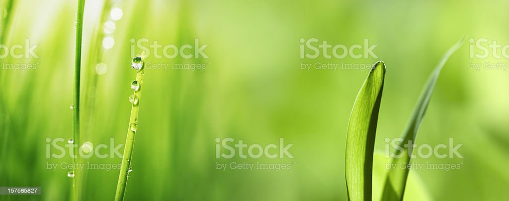 Green grass & Water drop (XXXL) royalty-free stock photo
