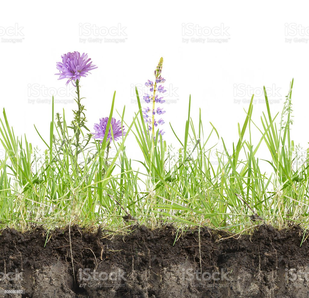 green grass with flowers stock photo