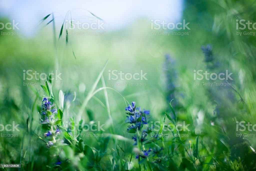 green grass with green bokeh background stock photo
