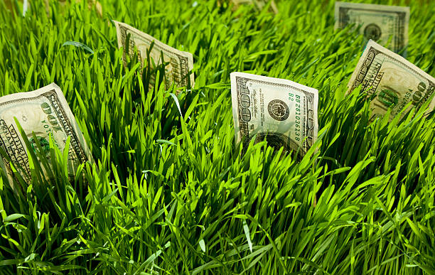 Green grass with money coming out of it stock photo
