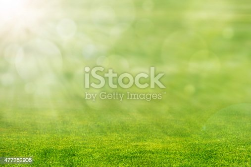 Green grass with ray of light and blurred background