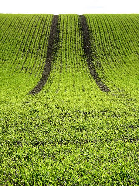 Grüne Gras mit Titel – Foto