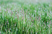 Green grass with water drop in the garden