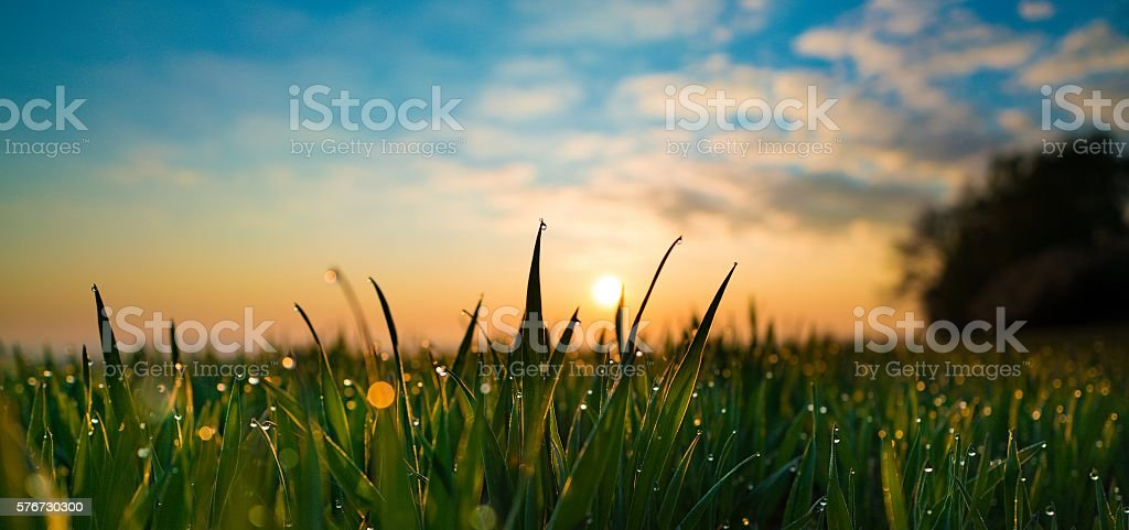 Green grass with water drop on sunrise – Foto