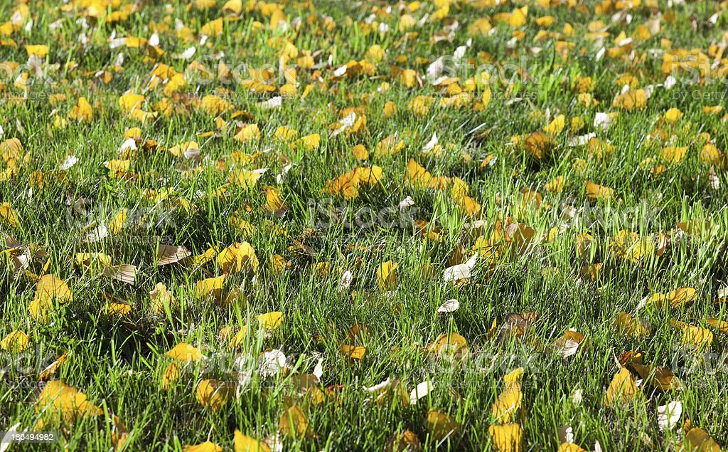 Green grass with yellow leaves as background royalty-free stock photo