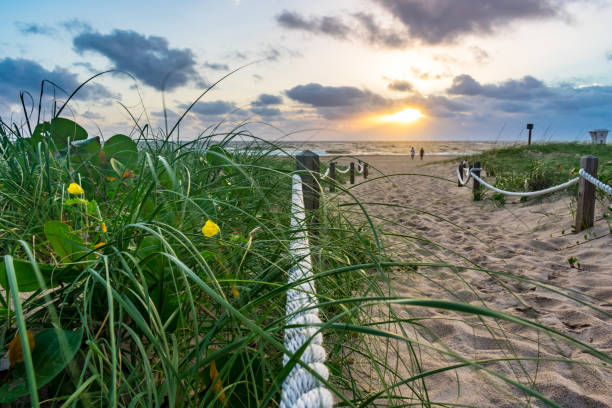 green grass yellow flower and sandy path towards sunshine over the ocean stock photo