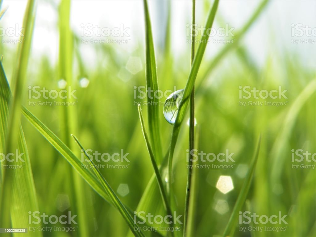 Green grasses green bacground with water drops stock photo