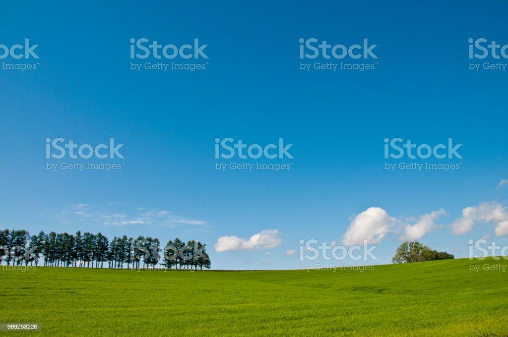Green grassland and blue sky in Biei stock photo