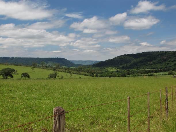 Green grassland in the Sierra