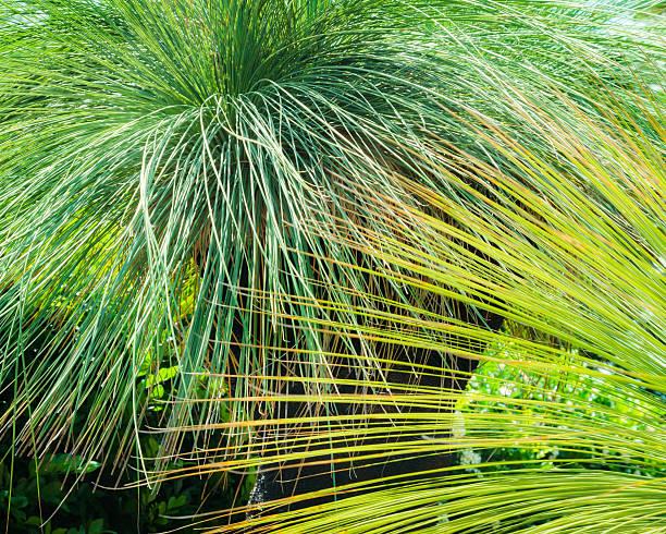 Green Grasstree Backdrop stock photo