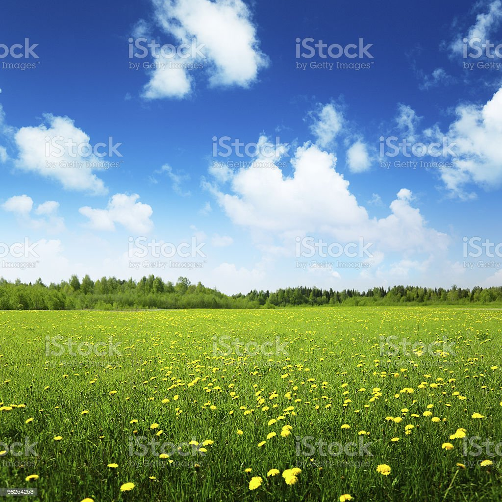 Green grassy field with yellow flowers under a blue sky royalty-free stock photo