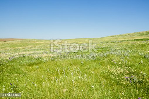 istock Green Grassy Montana Prairie With Lush Grass & Blue Sky 1170020546