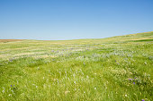 Beautiful grassy meadow and hillside with colorful wildflowers and lush grass. Photograph taken in northern Montana.