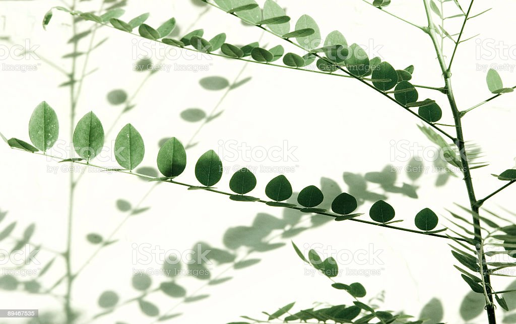 green growth royalty-free stock photo
