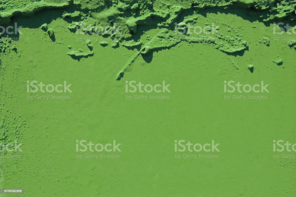 green grunge cement background. greenery, color of  year 2017. Pantone - Lizenzfrei 2017 Stock-Foto