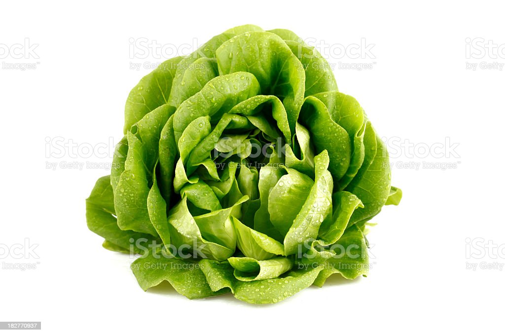 Green head of lettuce glistening with droplets of water stock photo