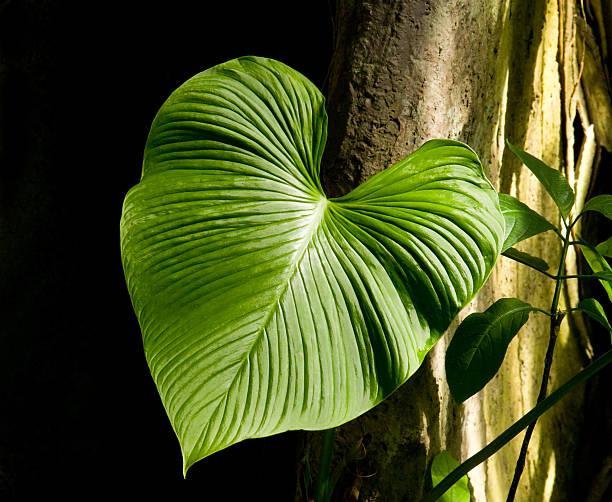 green heart stock photo