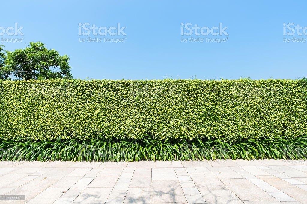 Siepe Verde E Pietra Muro Suolo Sfondo Di Texture Fotografie Stock