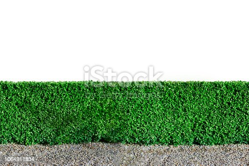 A background of a green hedge. The picture has a white background and can be used as loopable element.