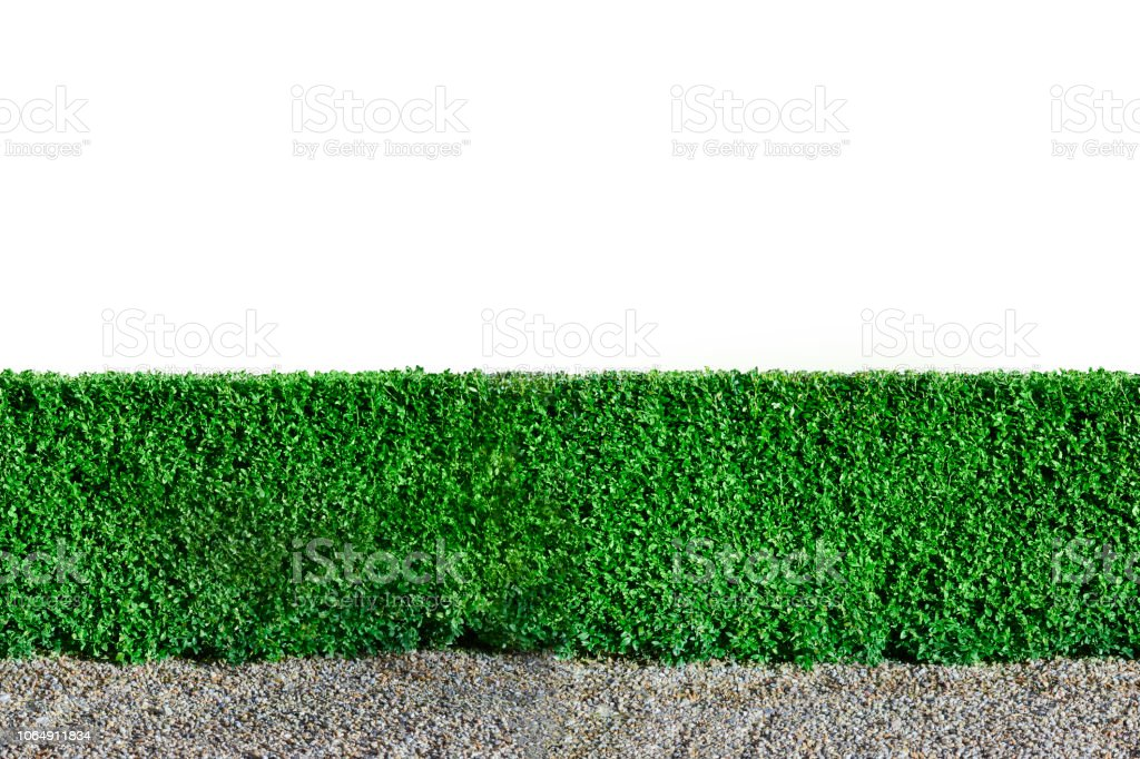 Green hedge for seamless background stock photo