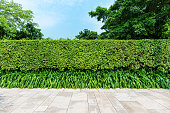 Green hedge wall