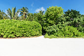 Green hedge wall with footpath in tropical island