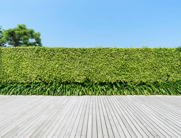 Green hedge with boardwalk stock photo