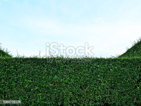 601026242istockphoto Green hedge with fence and blue sky 1054725124
