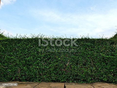 601026242istockphoto Green hedge with fence and blue sky 1054725180