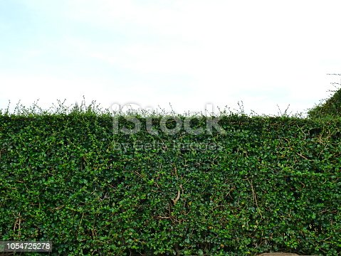 601026242istockphoto Green hedge with fence and blue sky 1054725278