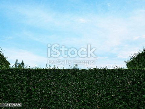 601026242istockphoto Green hedge with fence and blue sky 1054726360