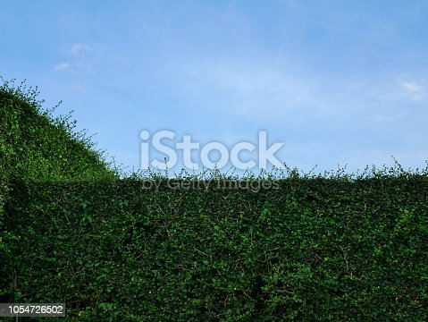 601026242istockphoto Green hedge with fence and blue sky 1054726502