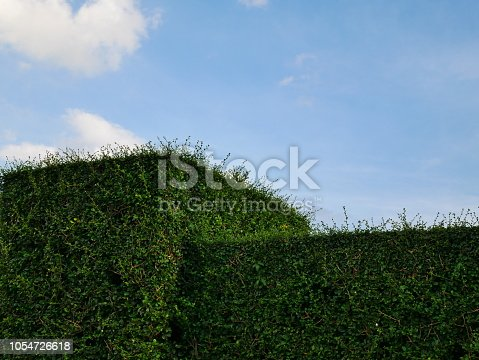601026242istockphoto Green hedge with fence and blue sky 1054726618