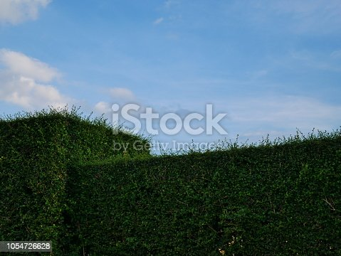 601026242istockphoto Green hedge with fence and blue sky 1054726628