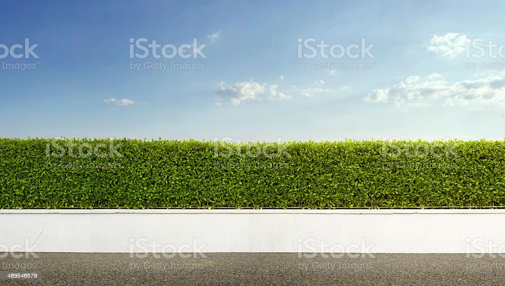 Green hedge with white fence under a blue sky
