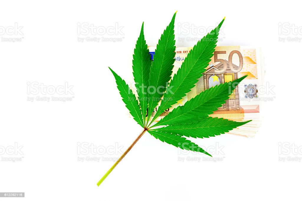 Green hemp leaf on euro money stock photo