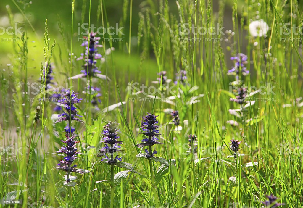 Green herb and violet flower royalty-free stock photo
