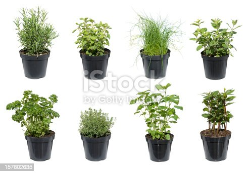 different herbs in black containers isolated on white. The different herbs are basil, parsley, mint,oregano, thyme, chive, rosemary, bay leaf.