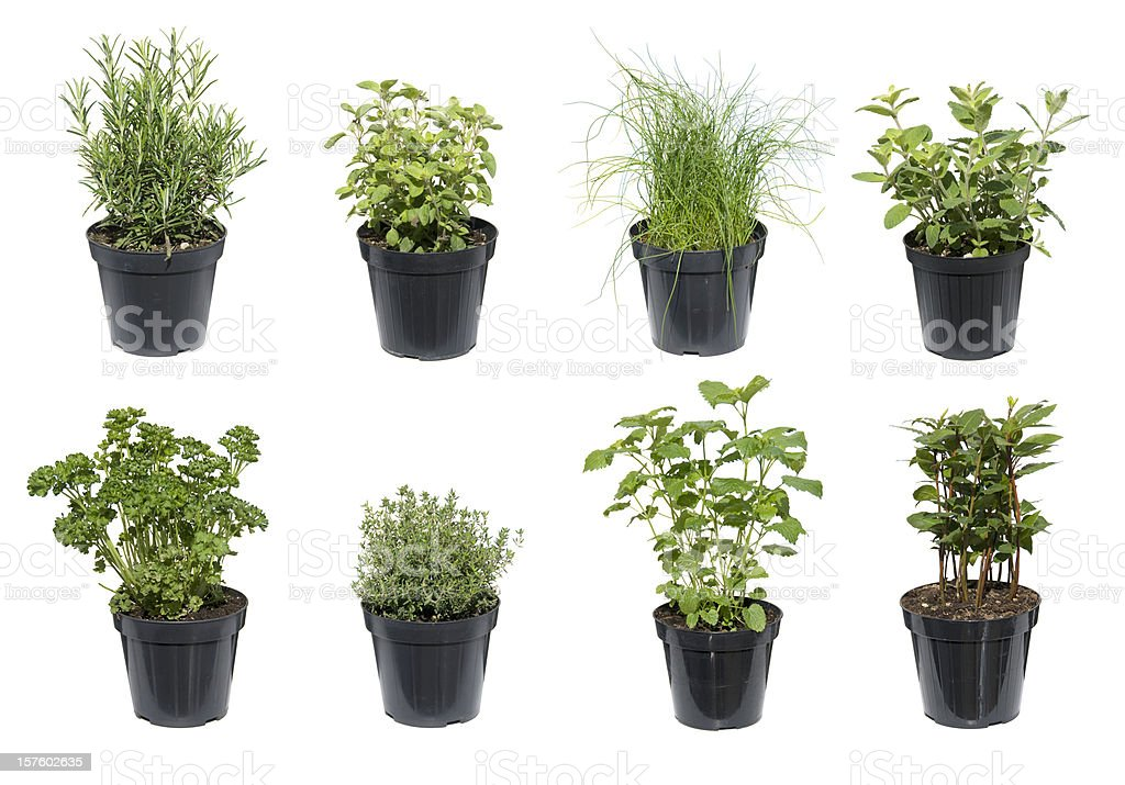 Green Herbs isolated on white stock photo